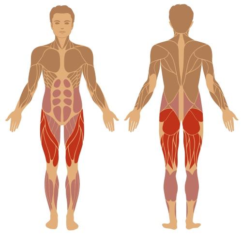 Welche Muskeln Ausfallschritte am besten trainieren